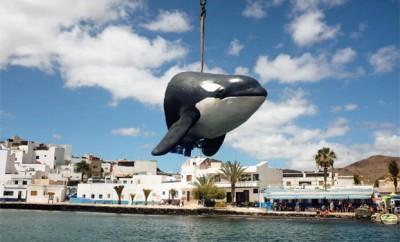 orca_fuerteventura