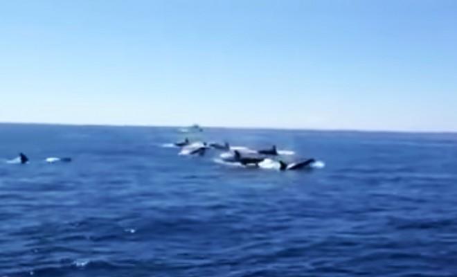 orcas_canarias