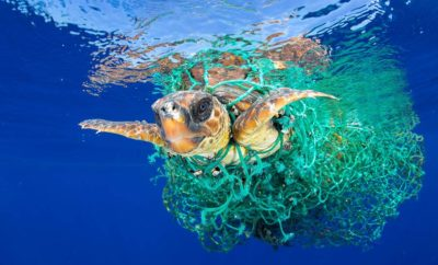 A sea turtle entangled in a fishing net swims off the coast of Tenerife, Canary Islands, Spain, on 8 June 2016. Sea turtles are considered a vulnerable species by the International Union for Conservation of Nature. Unattended fishing gear is responsible for many sea turtle deaths. Francis Perez/Courtesy of World Press Photo Foundation/Handout via REUTERS   THIS IMAGE HAS BEEN SUPPLIED BY A THIRD PARTY. FOR EDITORIAL USE ON WORLD PRESS PHOTO ONLY. NO RESALES. NO CROPPING