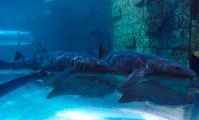 tiburones_poema_mar_grancanaria