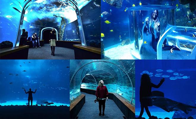 Home cool hunter canarias for Aquarium poema del mar